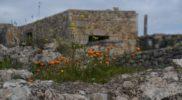 Wiosna w ruinach