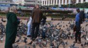 Gołębie w Casablance