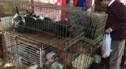 Na targu królików i gołębi