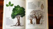 Inwentarz drzew egzotycznie