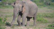 slonie 1