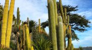 Eze ogród botaniczny